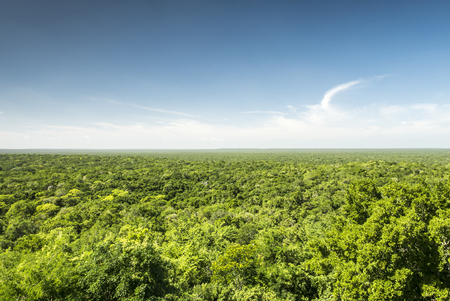 calakmul: jungle from above, calakmul biosphere reserve in yucatan mexico