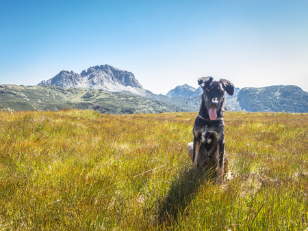 portrait of a beautiful young dog in a field in the mountain