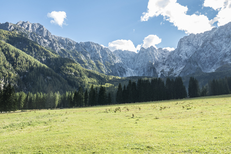 Beautiful mountain landscape, field forest and peaks
