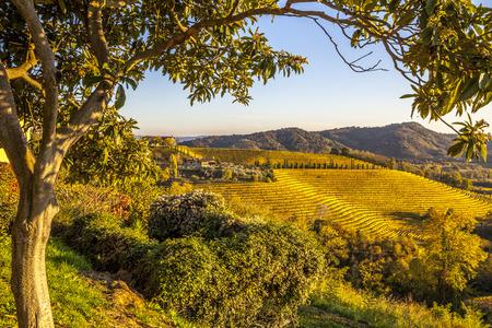 Vineyard in autumn, beautiful rural landscape in Collio region, Italy