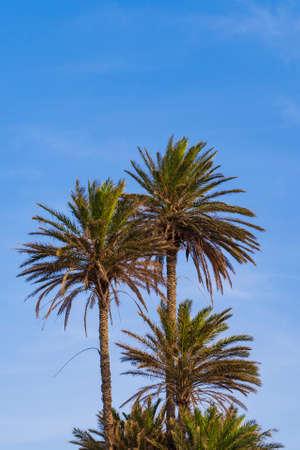 Palm trees and a blue sky
