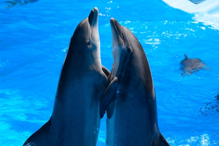 Two dolphins performing in a dophin show Stock fotó