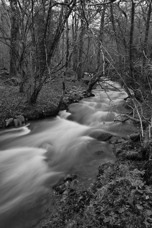 Long exposure of the river flowing through Horner woods in Somerset Imagens