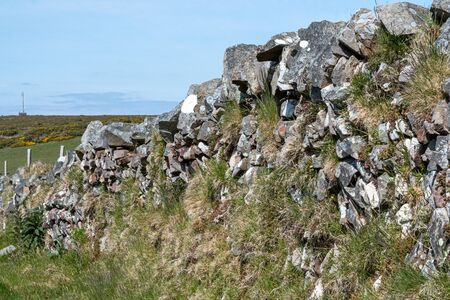 View of grass growing out of a drystone wall