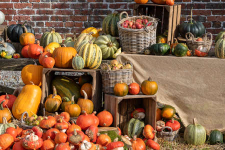 A selection of pumpkins on a wooden table Stock Photo