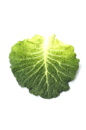 dieta: Cabbage leaf Stock Photo