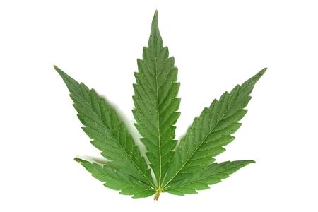 humo: hoja de marihuana