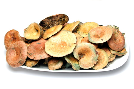 lactarius: Lactarius deliciosus Stock Photo