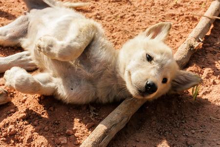 unimportant: puppy