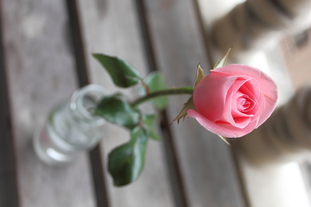 goodly: Pink rose backgrounds