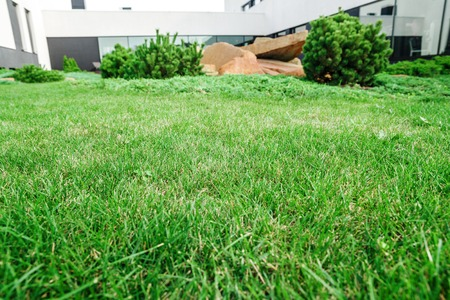 backyard with landscaping. green grass and large close-up