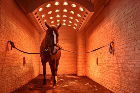 horse dry in the red sun solarium 版權商用圖片