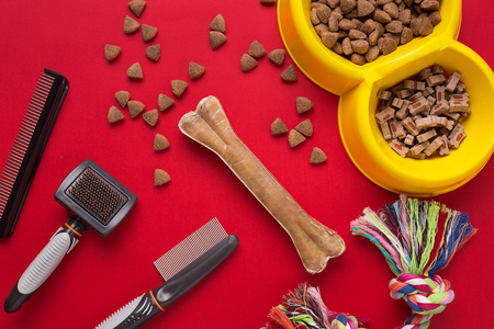 Pet accessories on red background. Top view Stock Photo
