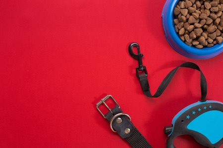 Collar, blue bowl with feed, leash and delicacy for dogs. Isolated on red background