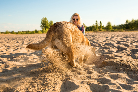 embarrassment: Yellow Labrador Retriever digging in the sand at a beach on a sunny day.