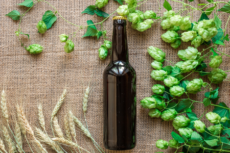 Bottle of beer with Brewing ingredients. Hop flower with wheat. Top view