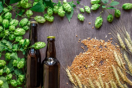 Two bottles of beer with wheat and hops as brewing ingredients in top view and copy space area