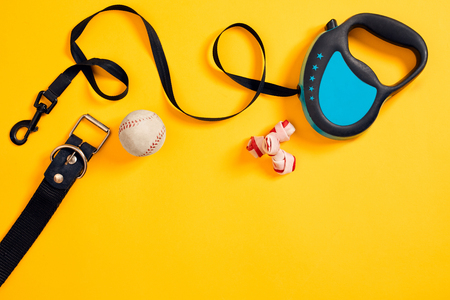 Black leather dog collar, bone, ball and blue leash attached on yellow background. Top view Stock Photo