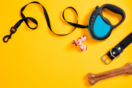 Black leather dog collar, bone and blue leash attached on yellow background. Top view