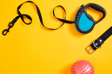 Black leather dog collar, pink ball and blue leash attached on yellow background. Top view