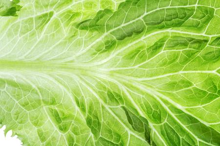 Fresh Lettuce one leaf close-up Reklamní fotografie