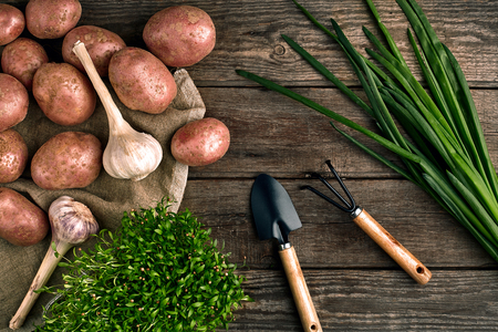 Gardening tools and fresh vegetables over wooden background
