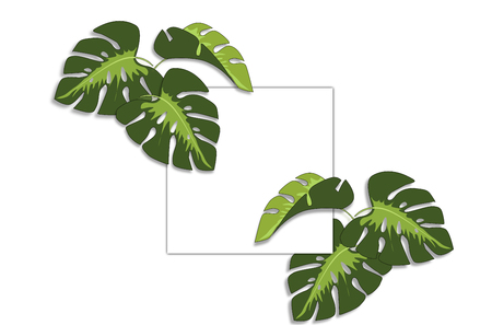 Frame and tropical leaves Monstera on white background a space for text. Stock fotó