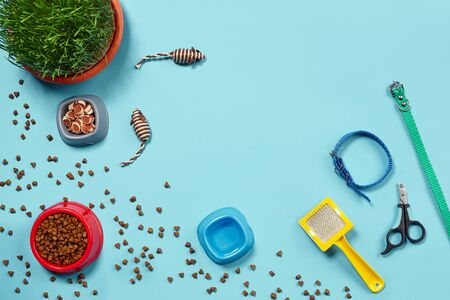 Flat lay composition with accessories for a cat on a blue background. Pet care. Archivio Fotografico
