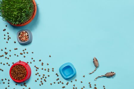 Flat lay composition with accessories for a cat on a blue background. Pet care.