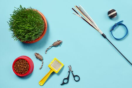 Flat lay composition with accessories for a cat on a blue background. Pet care. Stockfoto