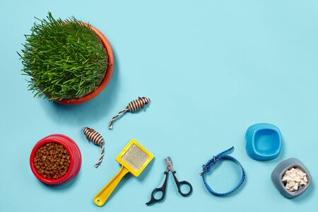 Flat lay composition with accessories for a cat on a blue background. Pet care. Banque d'images