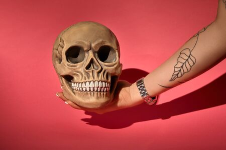 Tattooed hand of a female in a black watch is holding a realistic model of a human skull with teeth on a red background with shadow. Medical science or Halloween horror concept. Close-up shot.