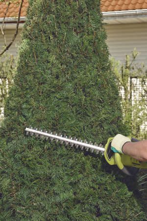 Hands of unknown man in gloves are trimming the overgrown green thuja with electric hedge trimmer on backyard of his country house. Close up