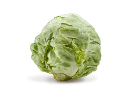 Fresh harvested, pale green cabbage isolated on white background. Smooth-leafed vegetable. Close up, copy space