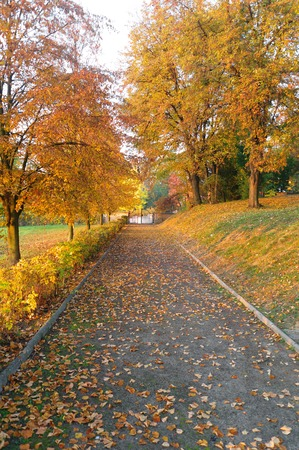 road autumnal: autumnal road to the gate