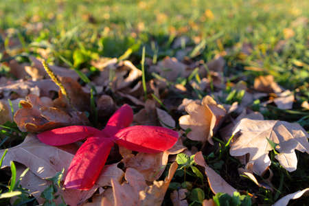 artificial flower between dried leafs photo