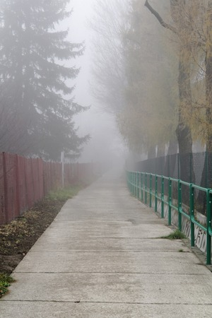 foggy hill: road to foggy hill