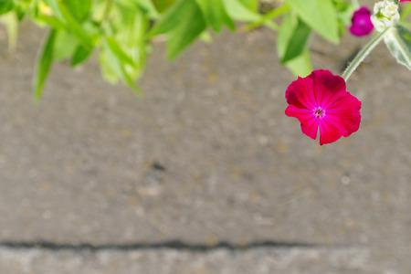 road shoulder: red flower on a blurred concrete road shoulder Stock Photo
