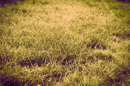 lomography: grass at the morning in a vintage style