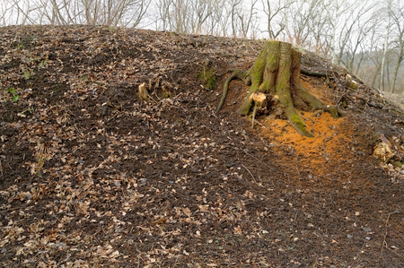 knoll: cut tree and sawdust on the ground