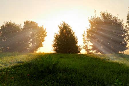 sunbeams: beautiful sunrise with sunbeams on the wilderness