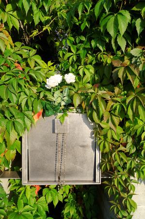 urn: golden urn on cemetery in the bush