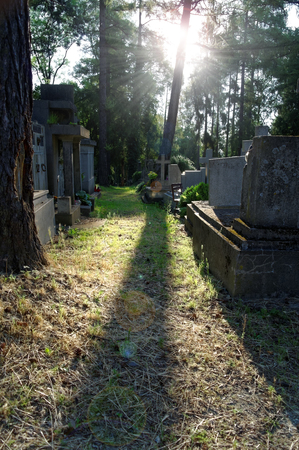 alley on the cemetery illuminated by morning sun with a lens flare effect