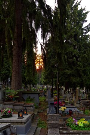sun translucent through branches on the cemetery