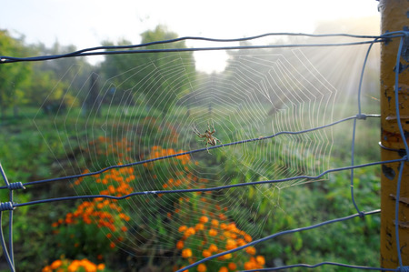 Big spider in a center of cobweb at the sunny day 写真素材