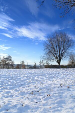 winter landscape at the cold sunny day 写真素材