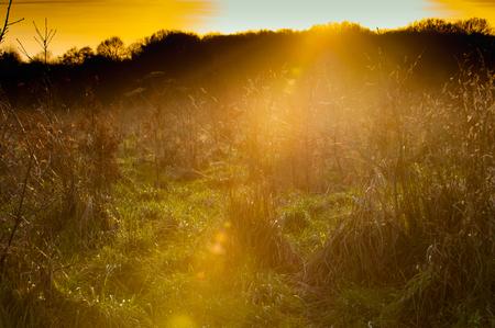 Yellow sunset over a field of long grass