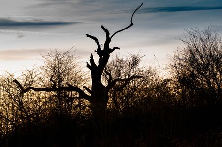 Silhouette of tree and hedgerow in front of a sunset Standard-Bild