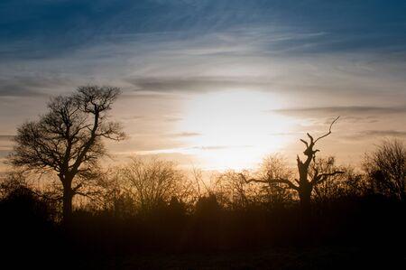 Silhouette des Baumes und Hecke vor einem Sonnenuntergang Standard-Bild