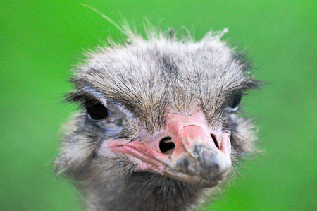 quizzical: Ostrich face